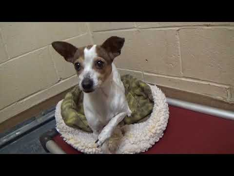 Please Help Save Clementine! Scared Little Shelter Dog! 2 yr.