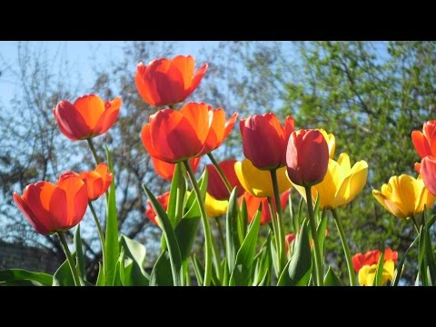 Цвела, буянила весна! Невероятно красивый ролик о весне и о любви!