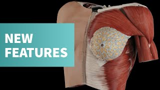 What's new in Complete Anatomy 2020
