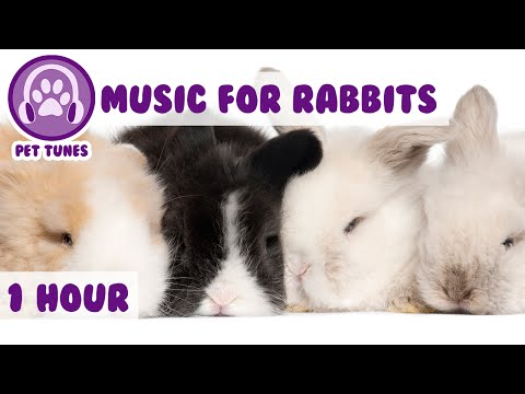 music-for-bunny-rabbits---calming-music-for-your-pet-rabbit.