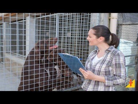 Clique e veja o vídeo Curso Como Montar um Canil CPT