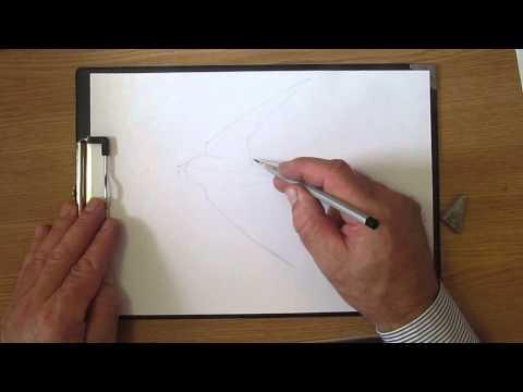 Как рисовать стрижа