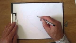 Как рисовать птицу ласточку. Часть 1. Урок 38