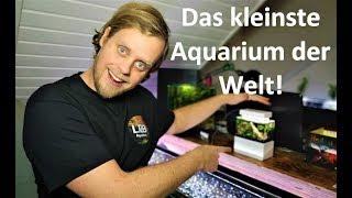 Das kleinste Aquarium der Welt - Mini Complete Tank vom Unboxing bis zum laufenden Aquarium