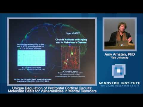 Amy Arnsten: Unique regulation of prefrontal cortical circuits
