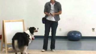 Dog Training - The Art Of Trick Dogging - Emily Larlham