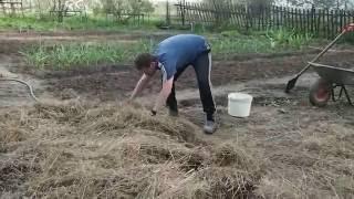 Картофель под соломой или сеном. Выращивание картофеля. Часть 1.