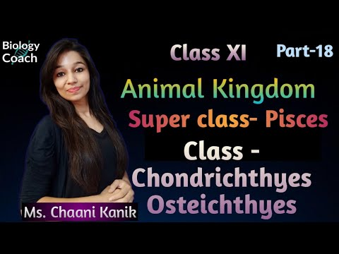 Animal Kingdom - Class Chondrichthyes , Class Osteichthyes ( Pisces ) / Class 11 Biology (Part-18)
