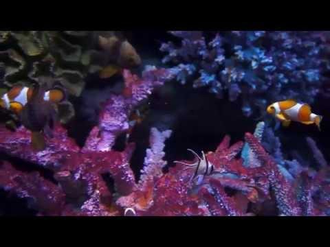 SEA LIFE Bangkok Ocean World [Siam Ocean World] | Bangkok Adventures