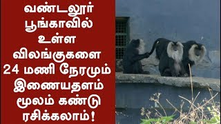 Provision made for people to view animals in Vandalur Zoo through online #Animals