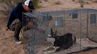 I Saved A Dog With A Hurt Leg Alone In The Desert | Brandon McMillan