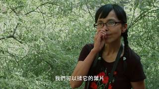Download lagu 肯園植物學堂|調順女性機能的 [貞節樹]