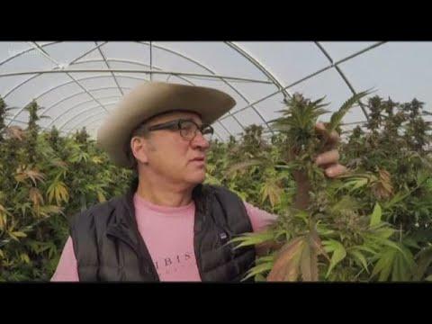 Jim Belushi talks about growing marijuana in Oregon