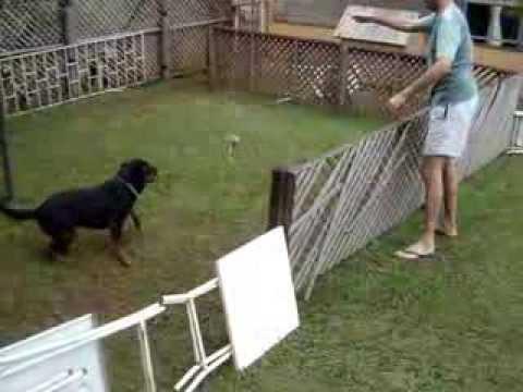 Exercícios para Rottweiler