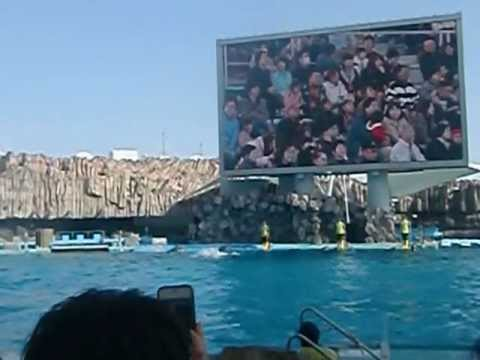 nagoya port public aquarium dolphin show part1