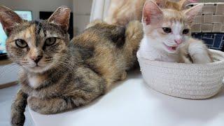 [고양이] 그리고 마늘까기 #8
