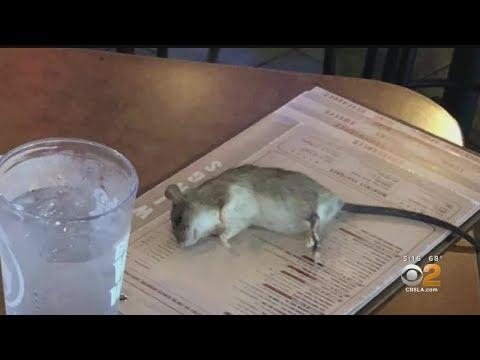 Michael Berry - Woman Says Rat Fell From Ceiling Onto Table At Buffalo Wild Wings In L.A.