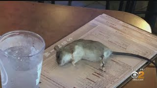 Woman Says Rat Fell From Ceiling At Buffalo Wild Wings In Westchester Video
