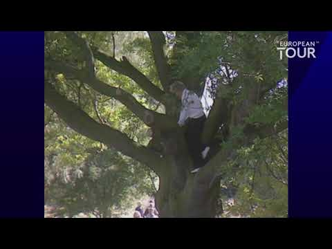 Bernhard Langer climbs a tree to hit golf shot