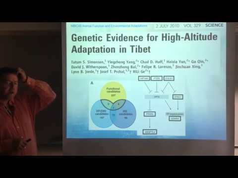 Altitude Physiology. 5. Genetic evidence of altitude adaptation in humans