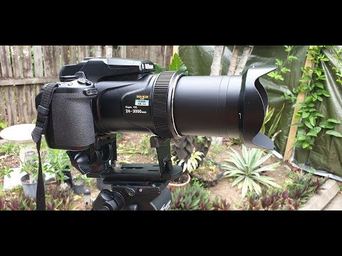 Nikon P1000 With Manfrotto 293 Telephoto Lens Support Modification