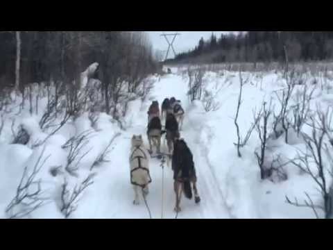 Sled Dog Commands