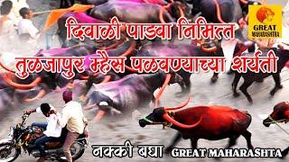 तुळजापूर: दिपावली पाडवा निमित्त   म्हैशी पळवण्याच्या शर्यती   Diwali special buffalo race   Tuljapur