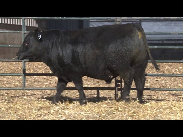 Schiefelbein Angus Farms Lot 190