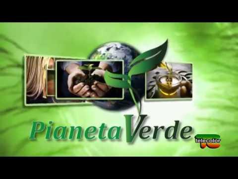 Pianeta Verde Produzione Del Parmigiano Reggiano Con Latte Biologico