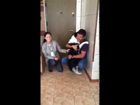 Border Collie dog happy to see owners after vacation