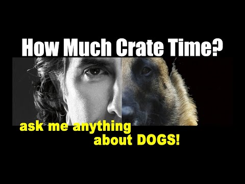 How Much Crate Time is Too Much for Puppies - Dog Training Videos - ask me anything