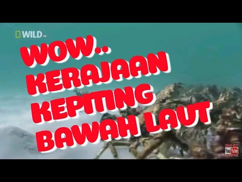 Wow... Kerajaan Kepiting Bawah Laut #Kehidupan bawah laut