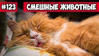 Смешные животные - спящие животные | Bazuzu Video ТОП подборка 123, март 2018