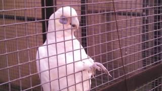 ФОТО Парк птиц Воробьи