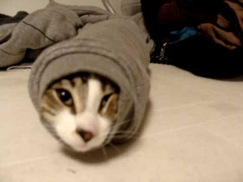 Katze steckt in Ärmel fest