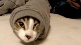 ジャストフィット状態のイモムシ猫、かたくなに袖から動かず