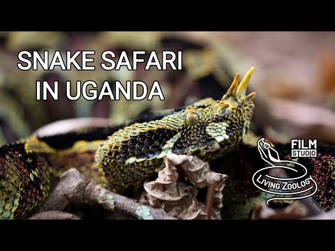 Snake Safari in Uganda (wildlife documentary by Living Zoology)