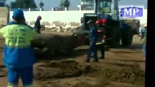 baleine morte retrouvée au port de Mohammedia -Maroc.