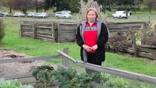 Sustainable Gardening Tips Kale - Learn Sustainable Gardening Tips for Kale