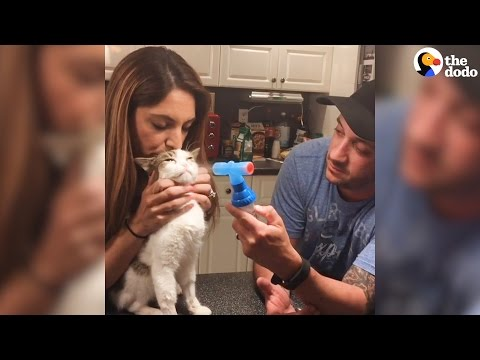 Cat Couple Only Adopt Special Needs Cats | The Dodo