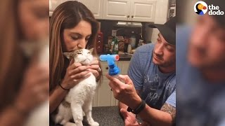 Cat Couple Only Adopt Special Needs Cats | The Dodo thumbnail