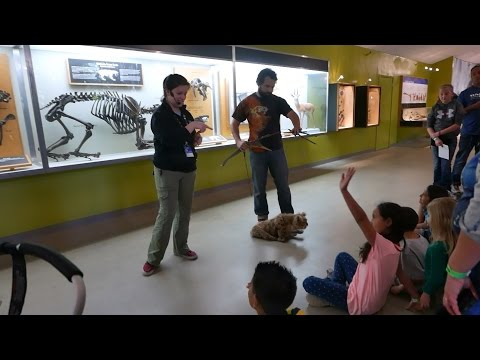 La Brea Tar Pits for Kids: Saber Tooth Tiger Kitten Puppet Show