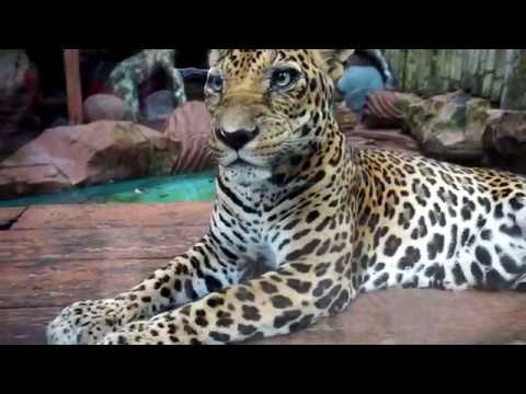 #TRAVELVLOG - BATU SECRET ZOO ( JATIM PARK 2 ) MALANG, INDONESIA