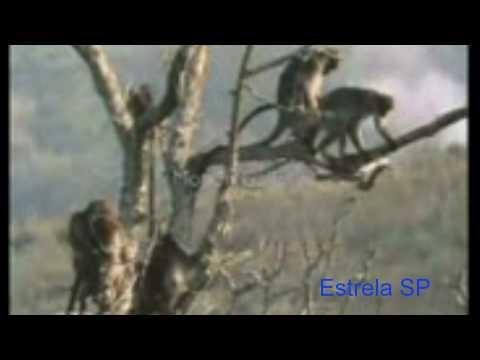 Videos Engraçados -  Macacos