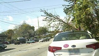 Wind blows pine tree down on Haywood Road in west Asheville