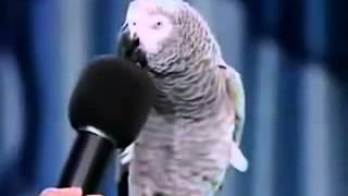 Попугай отвечает на вопросы, ПРИКОЛЬНО.