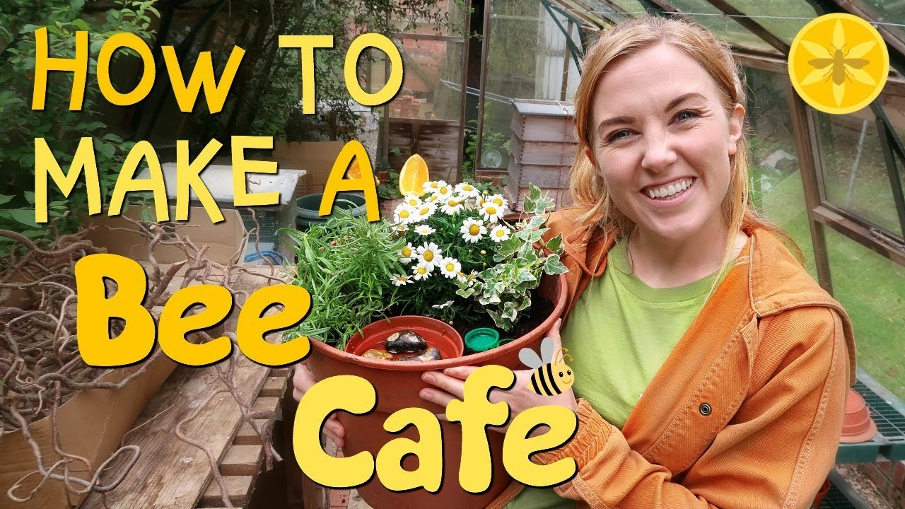 How to make a Bee Cafe! | Maddie Moate