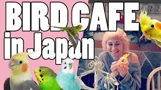 Bird Cafe In Japan! - Commander Holly Show