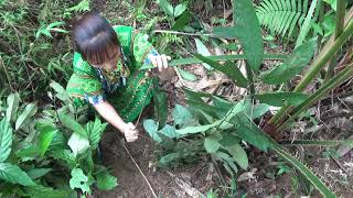 Survival skills: Finding food make primitive trap - Yummy cooking rabbit delicious eating