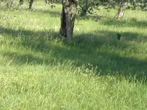 Stormo Di Rondini In Volo Radente Youtube